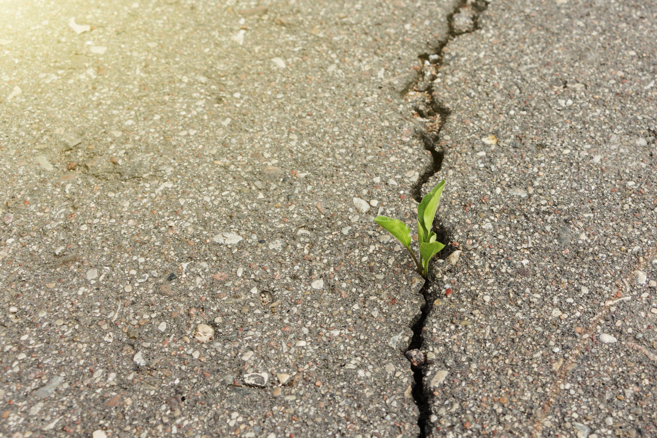 asphalt crack in springtime